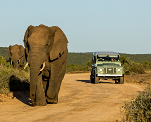 Elephants walking down a dirt road